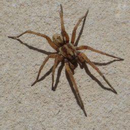 Уничтожение пауков в Ялте